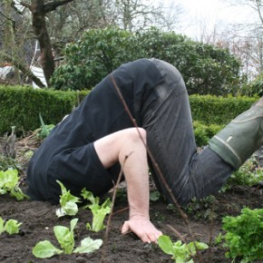 Notizen aus der Gartenwelt des Wilm Weppelmann